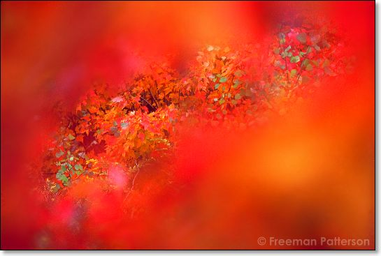 Autumn Glimpsed - By Freeman Patterson