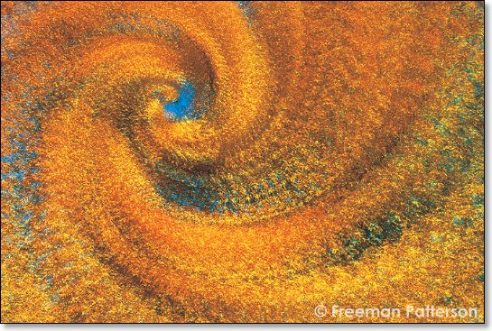 Maple Spiral - By Freeman Patterson