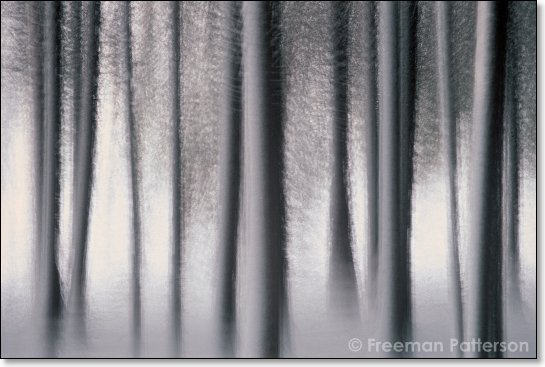 Winter Forest - By Freeman Patterson