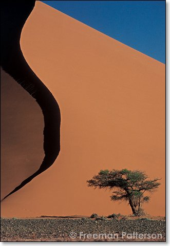Dune 45 Tree - By Freeman Patterson