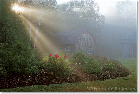Morning Sun - By Freeman Patterson